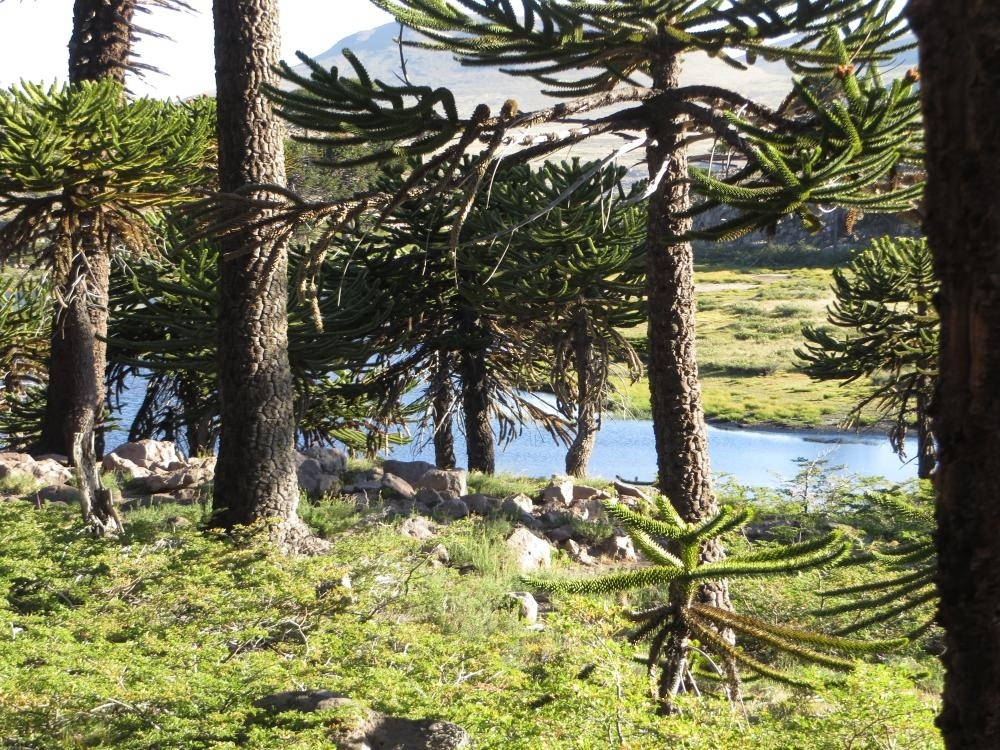 laguna-escondida-11.jpg.35e7e1fd817b0b3d2587b8ee74aeb0d9.jpg