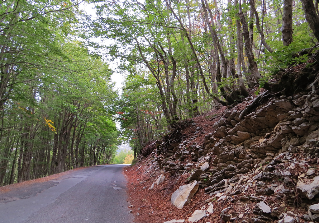 Las verdes hayas bordean la carretera