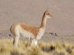 Fauna Del Parque Geotérmico