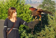 Uno de loso ejemplares de halcones con la respectiva cetrera