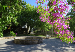 Bonita buganvilla en el recinto del Museo del Hospital