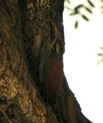 Más aves en el camping en Salta