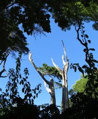Esculturas naturales del parque