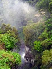 Una frondosa selva en la montaña