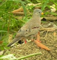 Aves de Ecuador