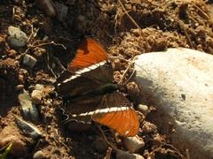 Reina Mariposa en Parque Nacional El Rey