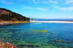 Launa en las Islas Cíes, con la Playa de Rodas al fondo