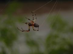 Pequeña arañita en Iguazú