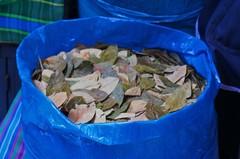 Hojas de coca, mercado de Arequipa