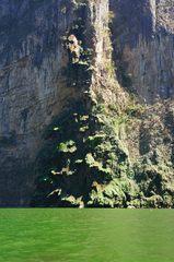 Cascada del árbol de navidad