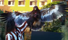 Y para terminar el águila real.