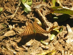 Mariposa en Parque Nacional iguazú