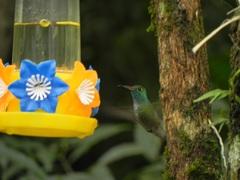 Picaflores en La Aripuca, Iguazú