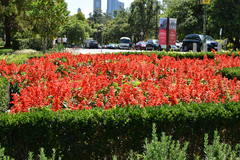 Flores del Jardín Botánico en Melbourne