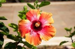 Flores de la Polinesia