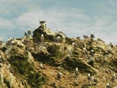 Islas Ballestas, Reserva Nacional Paracas