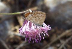 Delicada mariposa