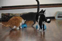 El turno de la merienda de los gatos