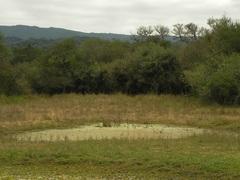 Pantanos en el Parque El Rey