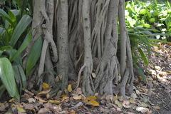 Jardín Botánico en Brisbane