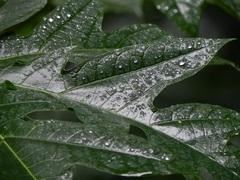 No para de llover en Iguazú