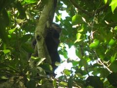 Mono caí en Parque Nacional Iguazú