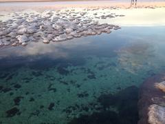 Colorido Laguna Tebinquinche
