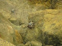 Cangrejos de Ecuador