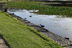 Lago en la Universidad de Queensland