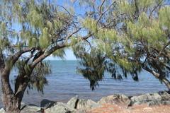 Vegetación y rocas en Redcliffe