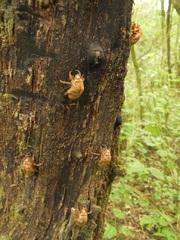 Mudas de escarabajo en Parque El Rey