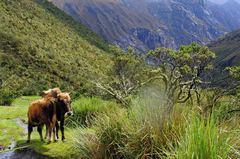 Habitantes del Parque Nacional Huascarán, Perú