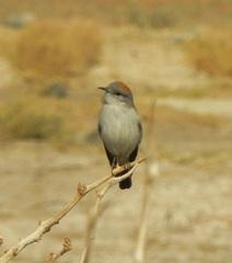 Una curiosa ave de la región de Jáchal