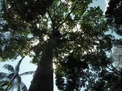 Reserva Madre de Dios, Tambopata, Perú