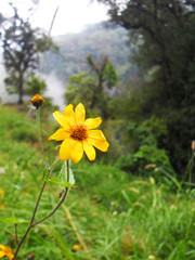 Las flores que adornan el camino