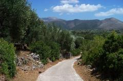La ruta sigue entre olivos centenarios y granjas dispersas