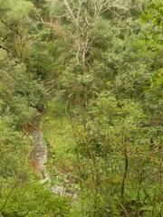 Senderos del Parque Nacional El Rey