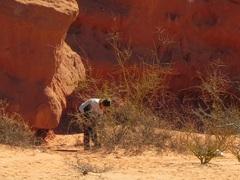 Buscando una lagartijita en la Quebrada de las Conchas