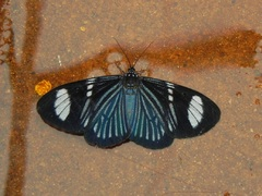 Mariposas de colores en Misiones