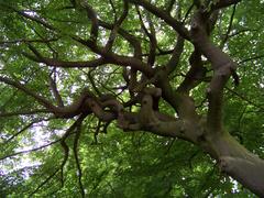 Un retorcido pero hermoso árbol del cementerio.