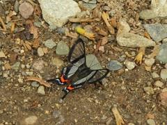 Hermosa fauna del camino a Machu Picchu