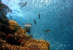 Paisaje Acuático de la Polinesia