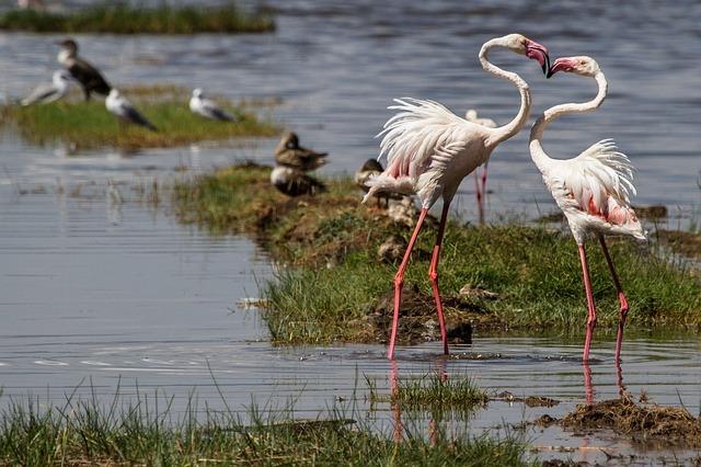 Flamencos en el lago