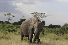 Elefantes en Africa
