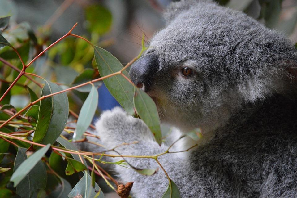 large.australia-zoo-998013_960_720.jpg.8f0596d910335e6f3b4dd822d3381129.jpg