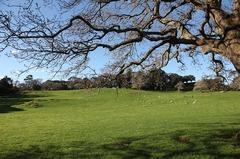 Parque en Auckland