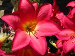 flower-1632448_640.jpg