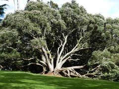 Verde en Nueva Zelanda