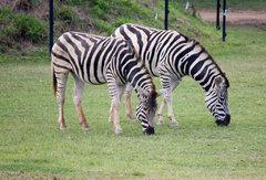Animales en Australia