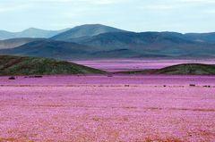 El desierto florecido